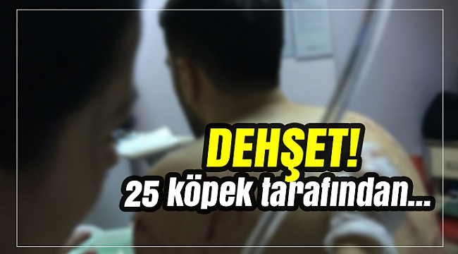 Ankara'da köpek dehşeti! 25 köpek üniversiteli gence saldırdı