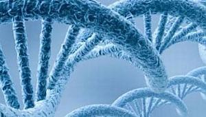 DNA İLE SUÇLUNUN YÜZÜ BELİRLENECEK