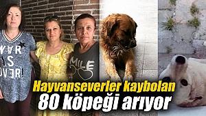 Hayvanseverler kaybolan 80 köpeği arıyor