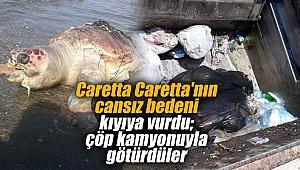 İzmir'de Caretta Caretta'nın cansız bedeni kıyıya vurdu; çöp kamyonuyla götürdüler