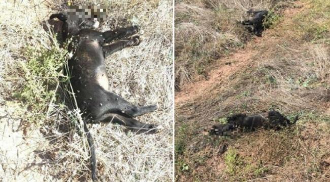 3 yavru köpeği tüfekle vurdular