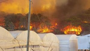 Antalya'daki yangın söndürelemiyor!