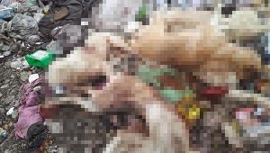 Silahla vurulan 8 köpek ölüsü bulundu!