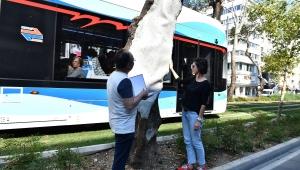 Anıt ağaçlara gençlik aşısı