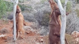 Bu nasıl canilik! İki köpeği boyunlarından...