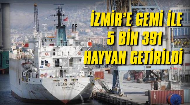 İzmir'e gemi ile 5 bin 391 hayvan getirildi