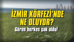 İzmir Körefezi'nde ne oluyor? Gören herkes şok oldu!