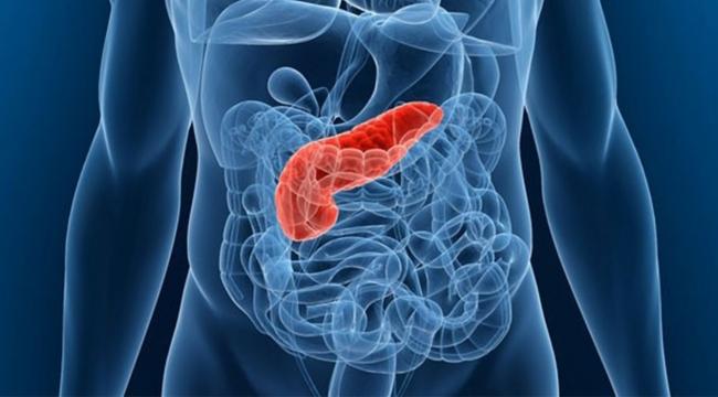 Bağırsak kanserine kalkan 10 besin