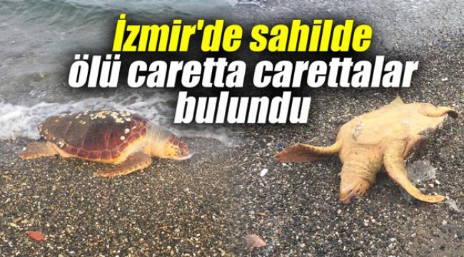 İzmir'de sahilde ölü caretta carettalar bulundu