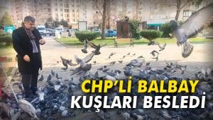 CHP'li Balbay, kuşları besledi