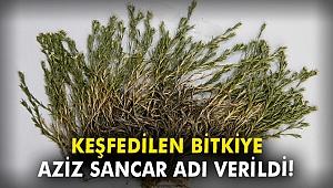 Keşfedilen bitkiye Aziz Sancar adı verildi