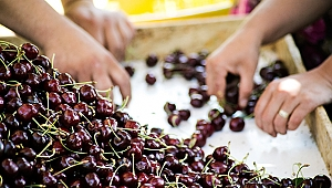 Yaş meyve sebze ihracatçılarından Kemalpaşa çıkarması