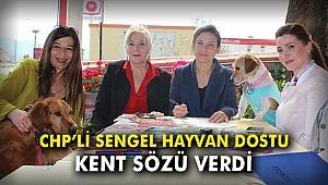 CHP'li Sengel, hayvan dostu kent sözü verdi