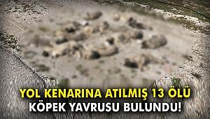 Yol kenarına atılmış 13 ölü köpek yavrusu bulundu