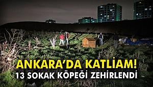 Ankara'da katliam! 13 sokak köpeği zehirlendi