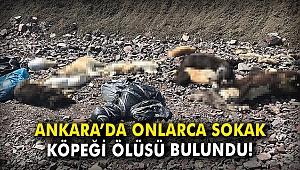 Ankara'da onlarca sokak köpeği ölüsü bulundu