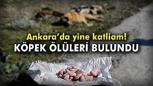Ankara'da yine katliam! Köpek ölüleri bulundu