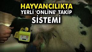 Hayvancılıkta yerli 'online' takip sistemi