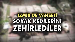 İzmir'de vahşet! Sokak kedilerini zehirlediler