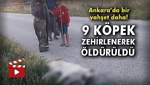 Ankara'da bir vahşet daha! 9 köpek zehirlenerek öldürüldü
