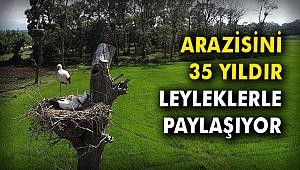Arazisini 35 yıldır leyleklerle paylaşıyor