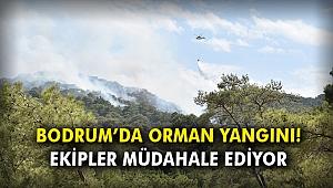 Bodrum'da orman yangını! Ekipler müdahale ediyor