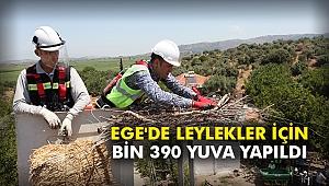 Ege'de leylekler için bin 390 yuva yapıldı