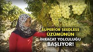 Superior seedless üzümünün ihracat yolculuğu başlıyor!