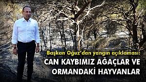 Başkan Oğuz:Can kaybımız ağaçlar ve ormandaki hayvanlar