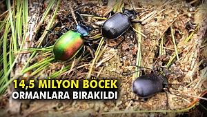 14,5 Milyon böcek ormanlara bırakıldı