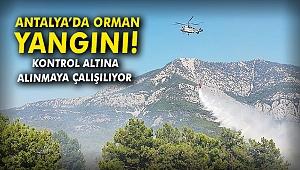 Antalya'da orman yangını! Kontrol altına alınmaya çalışılıyor
