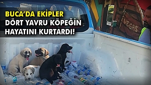Buca'da ekipler dört yavru köpeğin hayatını kurtardı!
