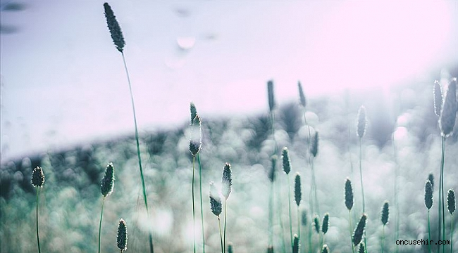 Sonbaharda alerji ataklarına dikkat