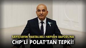 Sayıştayın hastalıklı hayvan raporuna CHP'li Polat'tan tepki!
