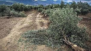 e-Poliçe ile yılda 21 bin ağacın kesilmesi önlenecek
