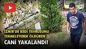 İzmir'de kedi yavrusunu tekmeleyerek öldüren cani yakalandı!