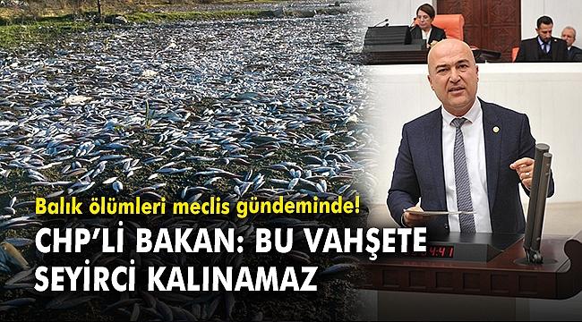 Balık ölümleri meclis gündeminde! CHP'li Bakan: Bu vahşete seyirci kalınamaz