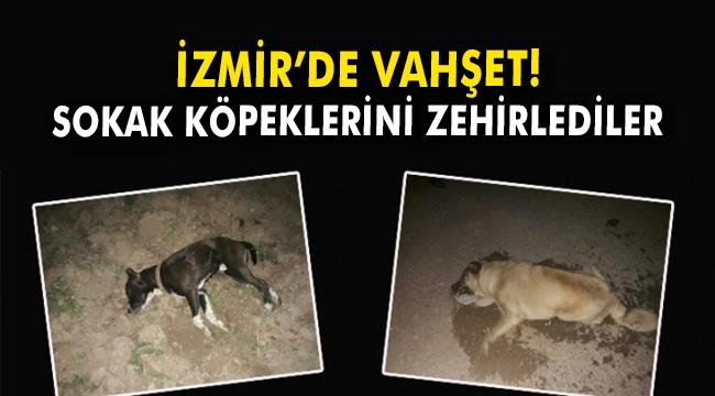 İzmir'de vahşet! Sokak köpeklerini zehirlediler
