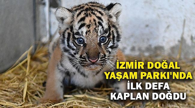 İzmir Doğal Yaşam Parkı'nda ilk defa kaplan doğdu