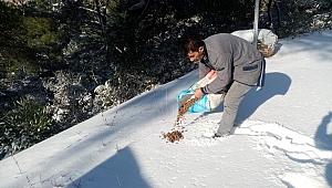 Kemalpaşa Belediyesi soğuk kış günlerinde can dostları unutmadı