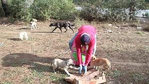 Menderes'te sokak hayvanlarına mama desteği