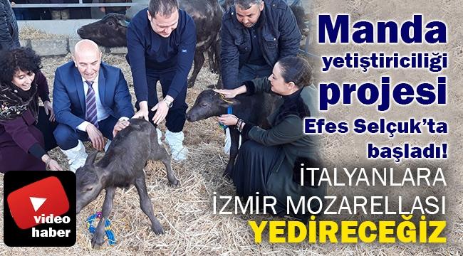 İtalyanlara İzmir Mozarellası yedireceğiz