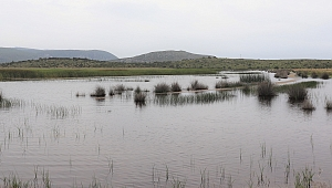 İzmir'deki o gölün kanalları kapatılıyor