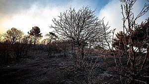 Yangınların en büyük etkeni belli oldu