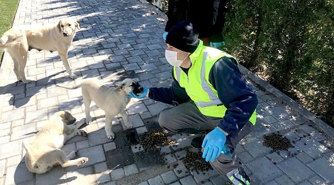 Sokak hayvanları corona mağduru olmasın!