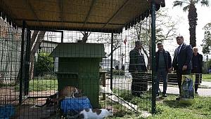 Başkan Tugay sokak hayvanlarına mama dağıttı