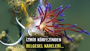 İzmir Körfezi'nden tablo gibi kareler