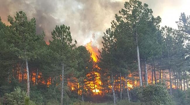 Muğla'nın Marmaris ilçesinde orman yangını çıktı