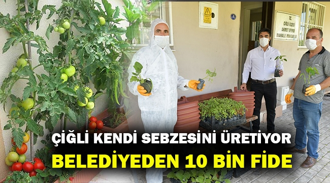 Çiğli'de evde sebze dönemi... Belediye ücretsiz fide dağıtıyor...