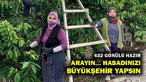 İzmir Büyükşehir, 432 gönüllü ile 150 üreticiye meyve hasadına gidiyor